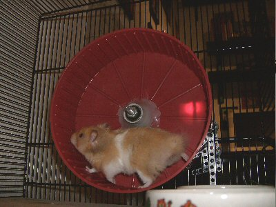 hamster meter. Black Bedroom Furniture Sets. Home Design Ideas